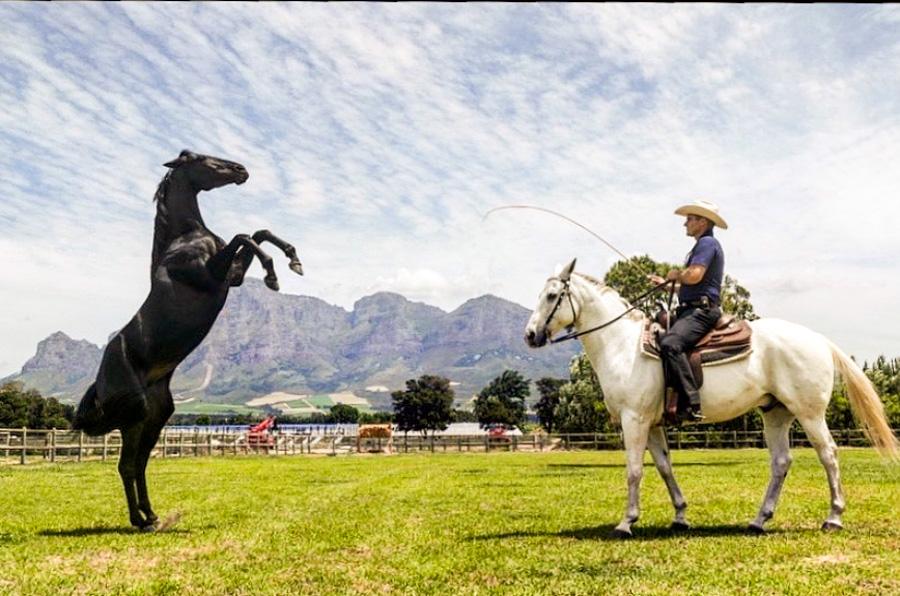 Cody-Rawson-Harris-Horse-Training-01