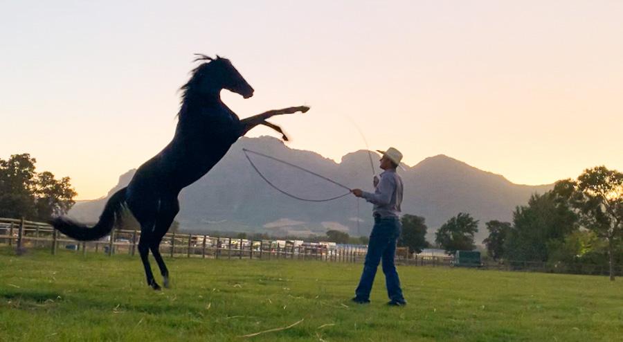 Cody-Rawson-Harris-Horse-Training-02