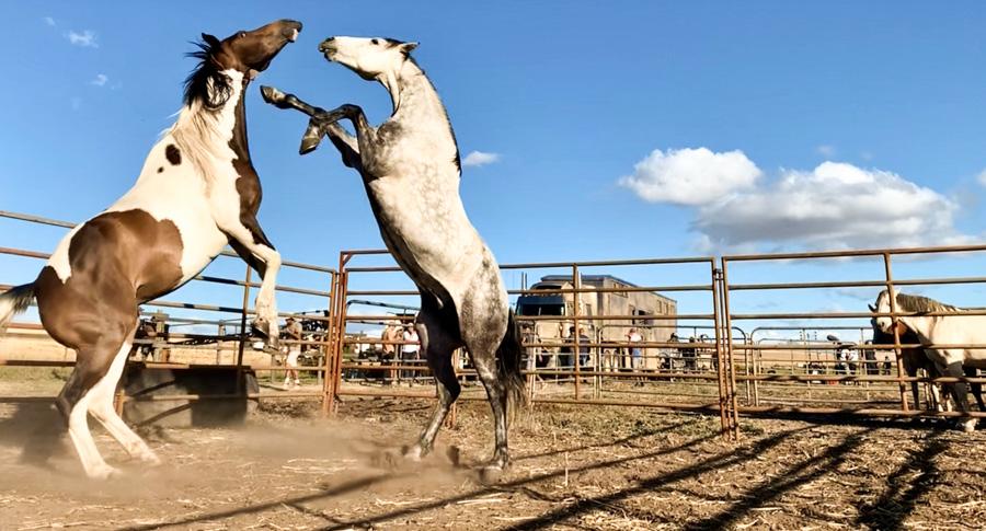 Cody-Rawson-Harris-Horse-Training-03