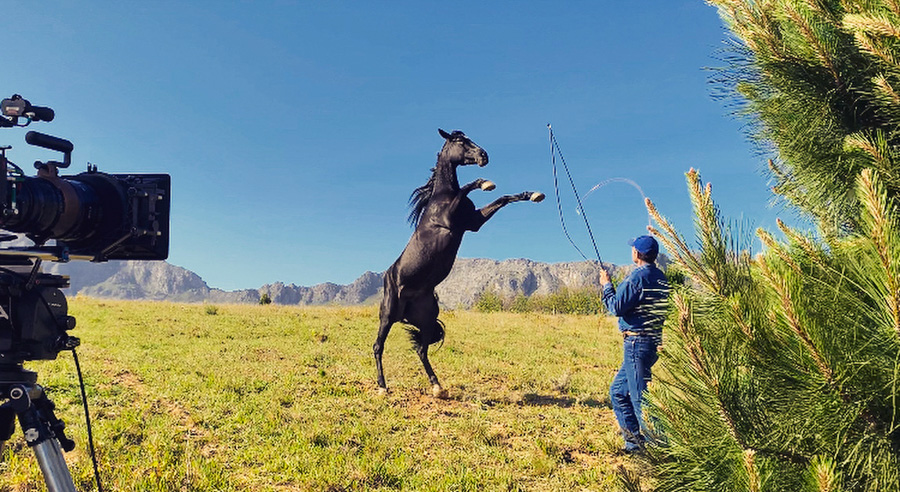 Cody-Rawson-Harris-Horse-Training-05
