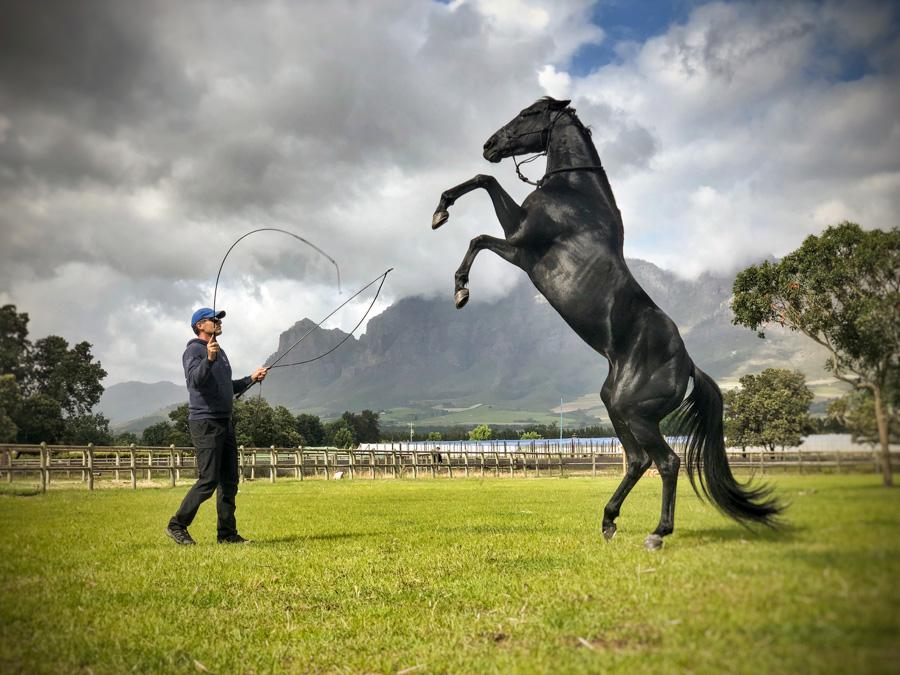 Cody-Rawson-Harris-Horse-Training-15