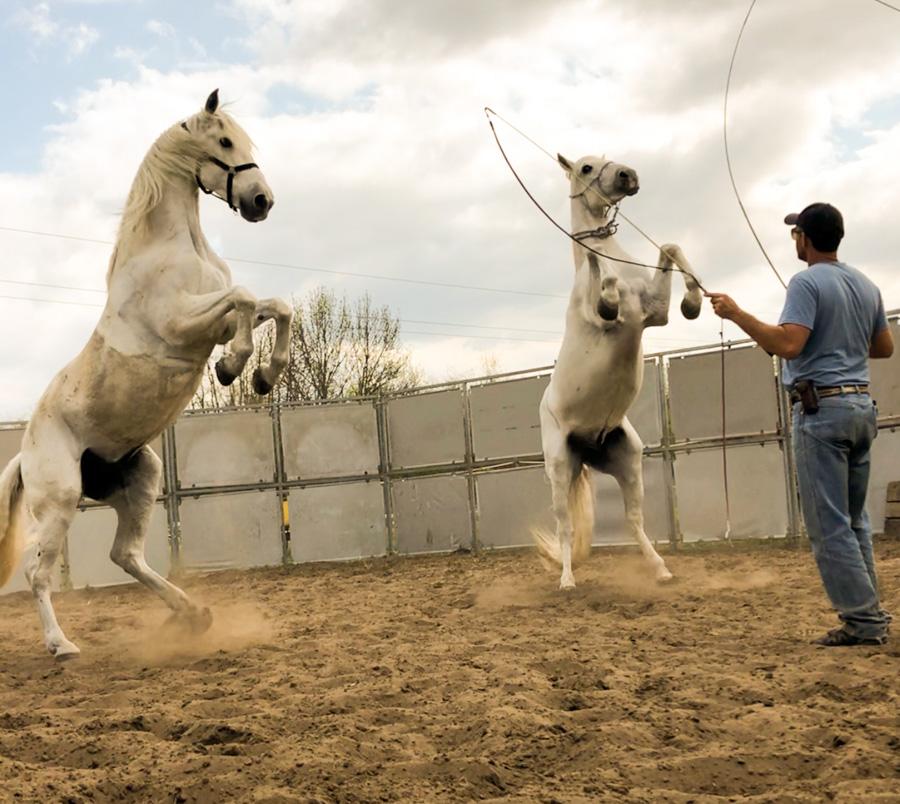 Cody-Rawson-Harris-Horse-Training-17