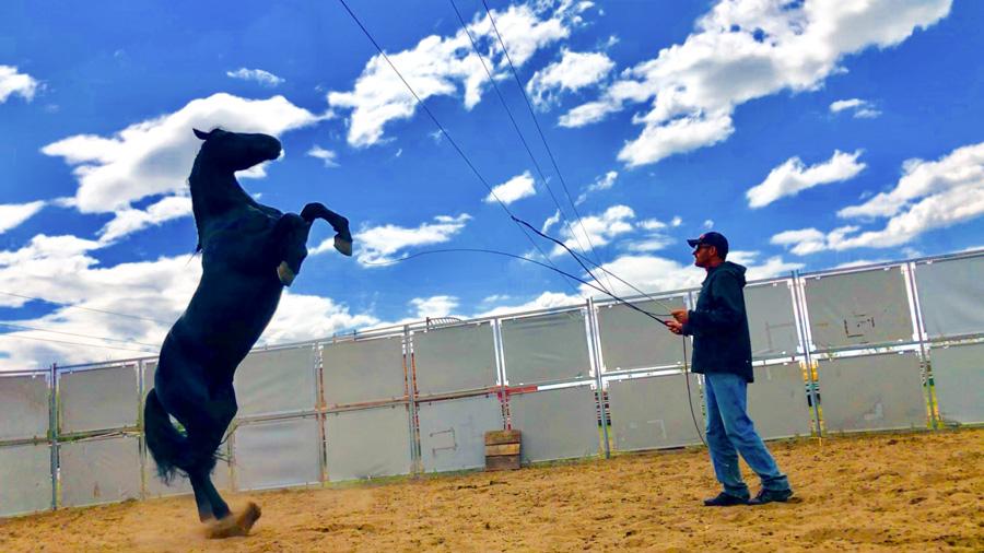 Cody-Rawson-Harris-Horse-Training-18